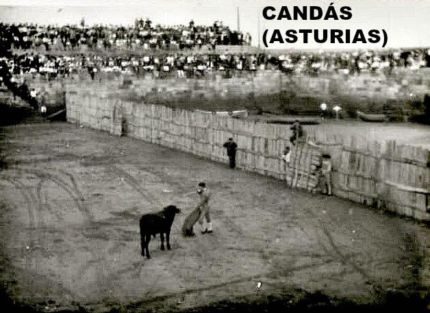 CANDAS ASTURIAS TOROS