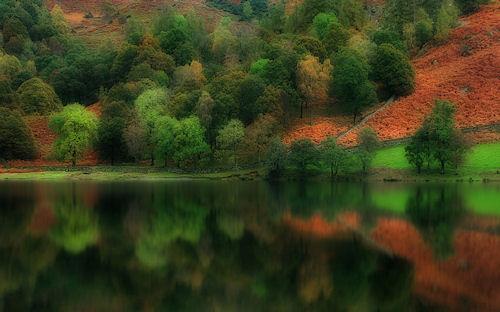 Bosque junto al lago de agua transparente