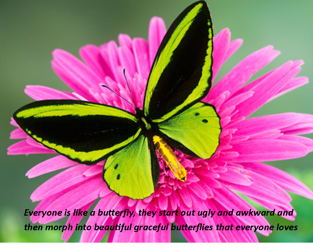 Friendship Quotes About Butterflies : Butterfly friendship quotes