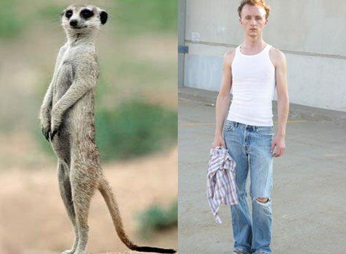 Meerkat and Paul Cram Actor