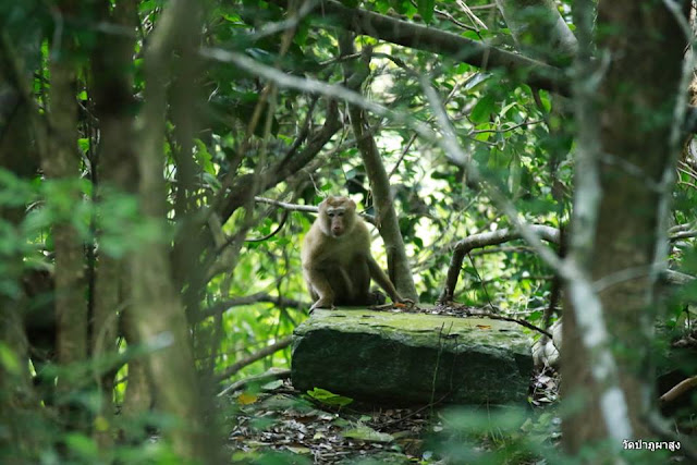 Rock, Stone, Monkey In Forest Images