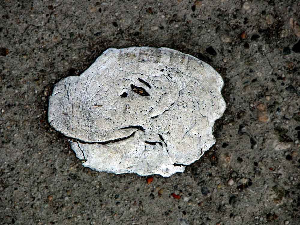 dinosaur head in a paint splatter on the sidewalk (c) David Ocker
