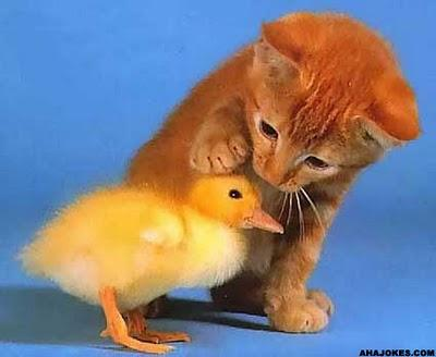 Kindness-cat-and-bird - Add More Kindness to Your Life