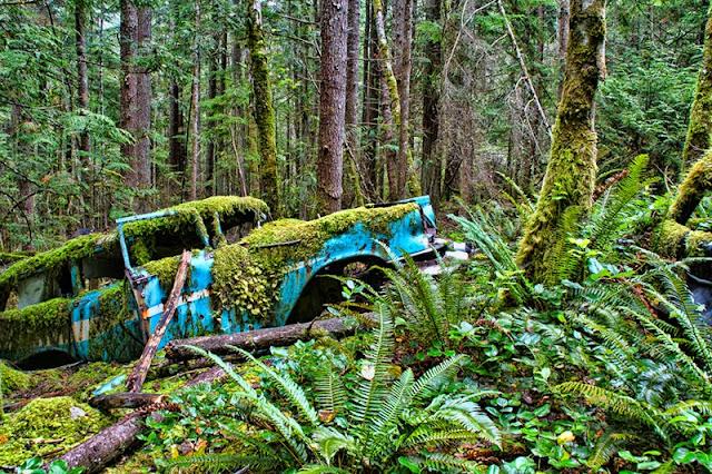 old car, antique car, rust, abandoned car