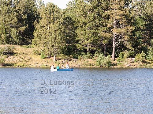 Killdeers phoebes and finches and ducks lake cuyamaca for Lake cuyamaca fishing