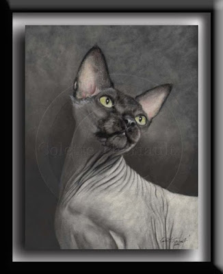 Sphynx Hairless Cat Portrait in Pastel