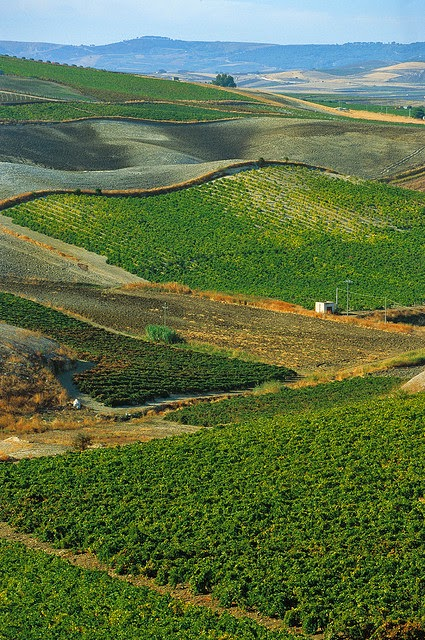 Vineyards in Sicily