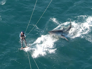 Kitesurf deportes de agua peligroso tiburon