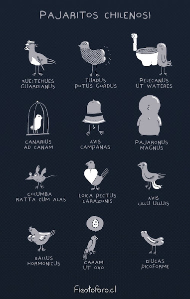 Colección de pajaritos y sus nombres, de ánimo humoroso.