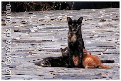 Gata amamantando a dos gatitos