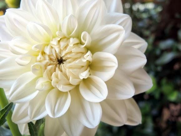 katiecrackernuts.blogspot.com || summer gardening