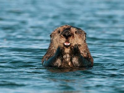 Hình ảnh động vật hài hước