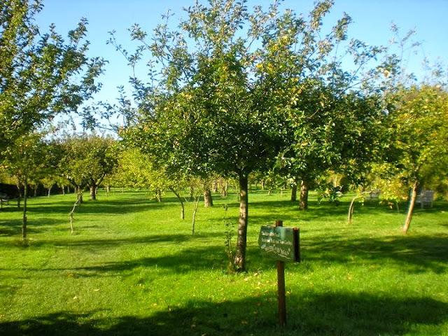 anne hathaway's orchard stratford upon avon