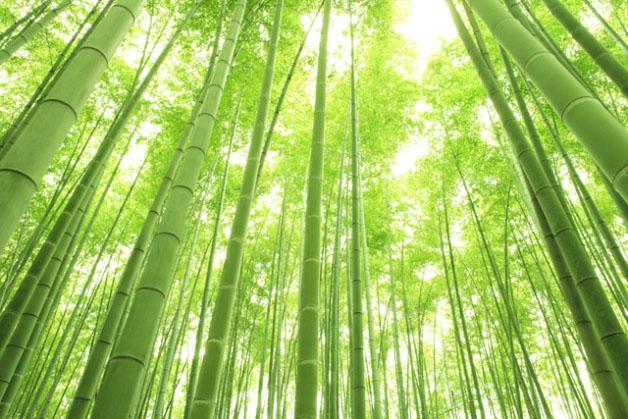 La fortaleza del Bambú