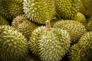 Klasifikasi dan Morfologi Tanaman Durian (Durio zibethinus Murr)