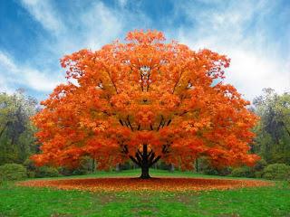Tree Wallpaper Desktop