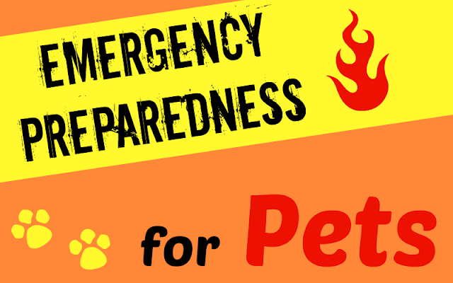 Emergency Preparedness tips for you and your pet