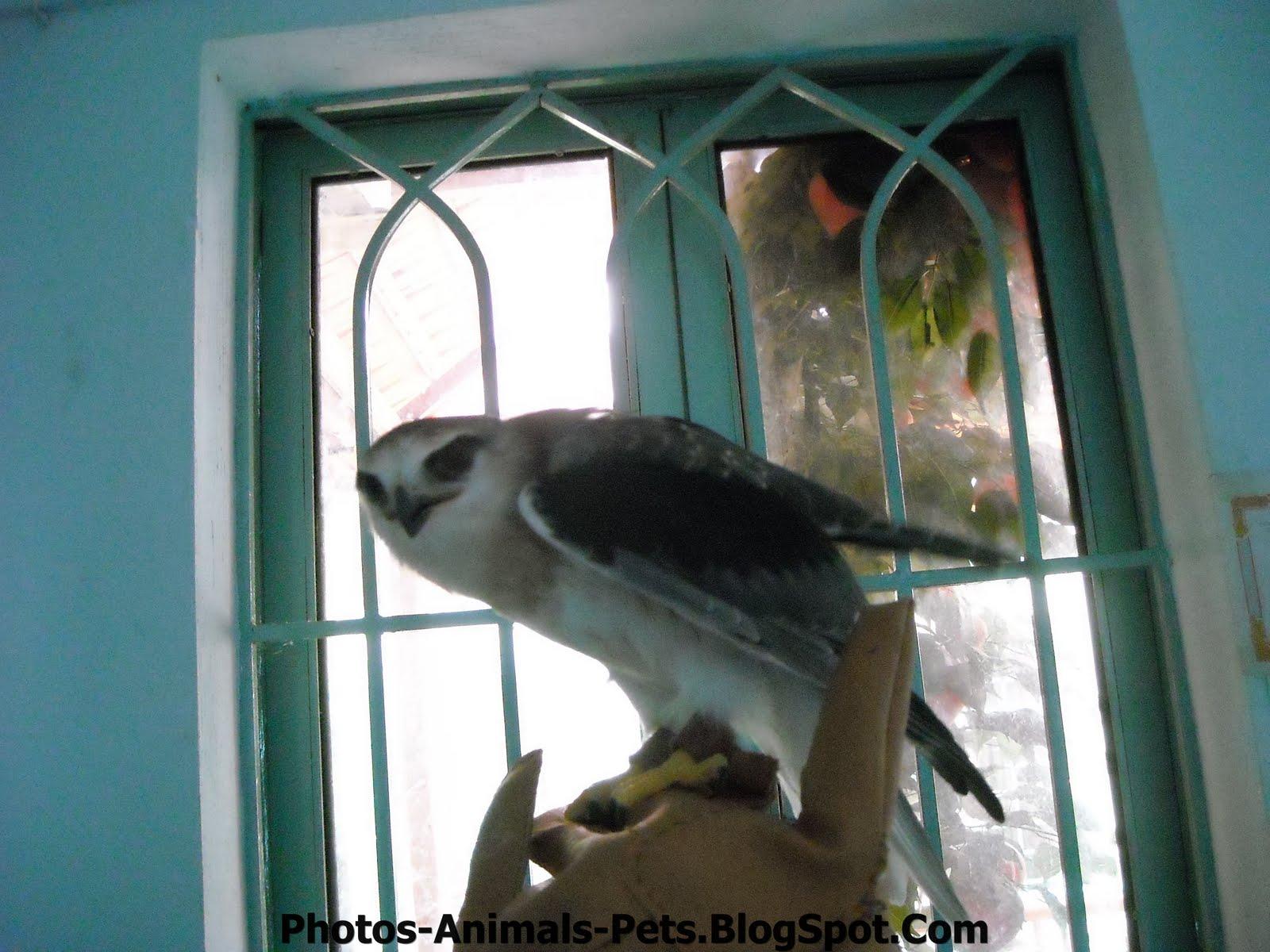 http://1.bp.blogspot.com/-Dp_z8E7LQsI/TxRak2x7_YI/AAAAAAAAC2c/CmKRidIZavk/s1600/Pet%2Bbird.jpg