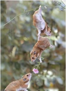 Gambar Foto Lucu Menyatakan Cinta