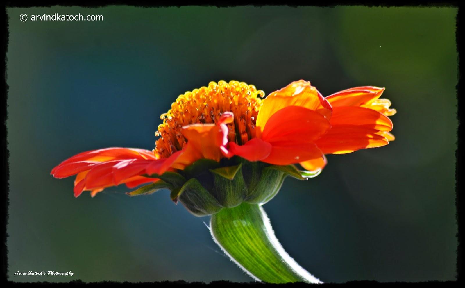Sunlight, Flower, Morning, Beautiful