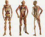 38 Curiosidades sobre o Corpo Humano