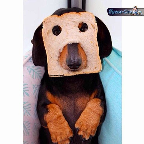 funny dog mask picture