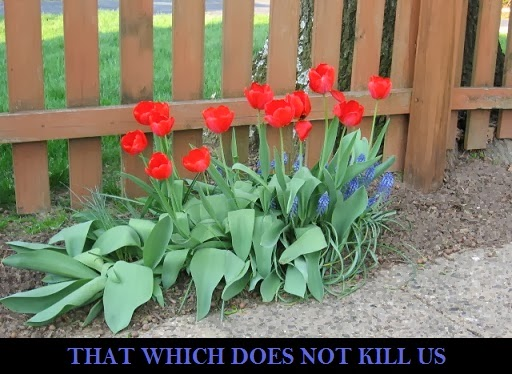 That Which Does Not Kill Us