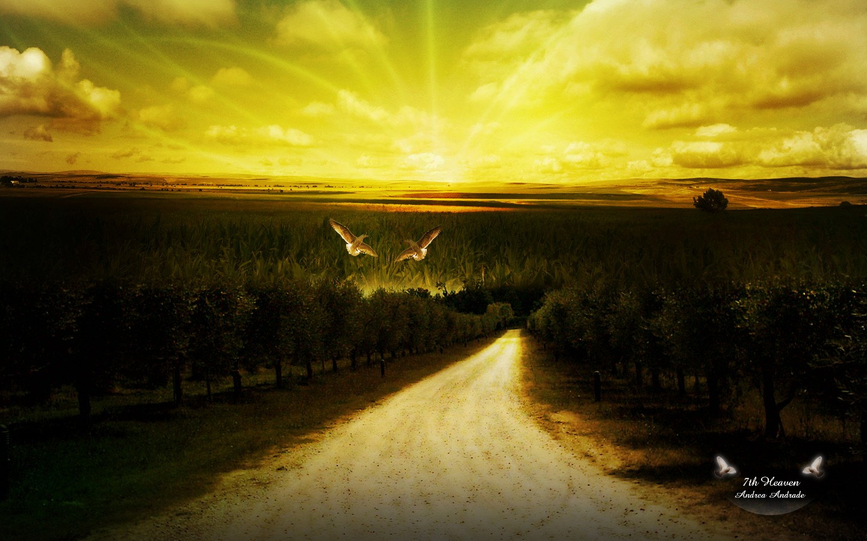 Aves en el camino