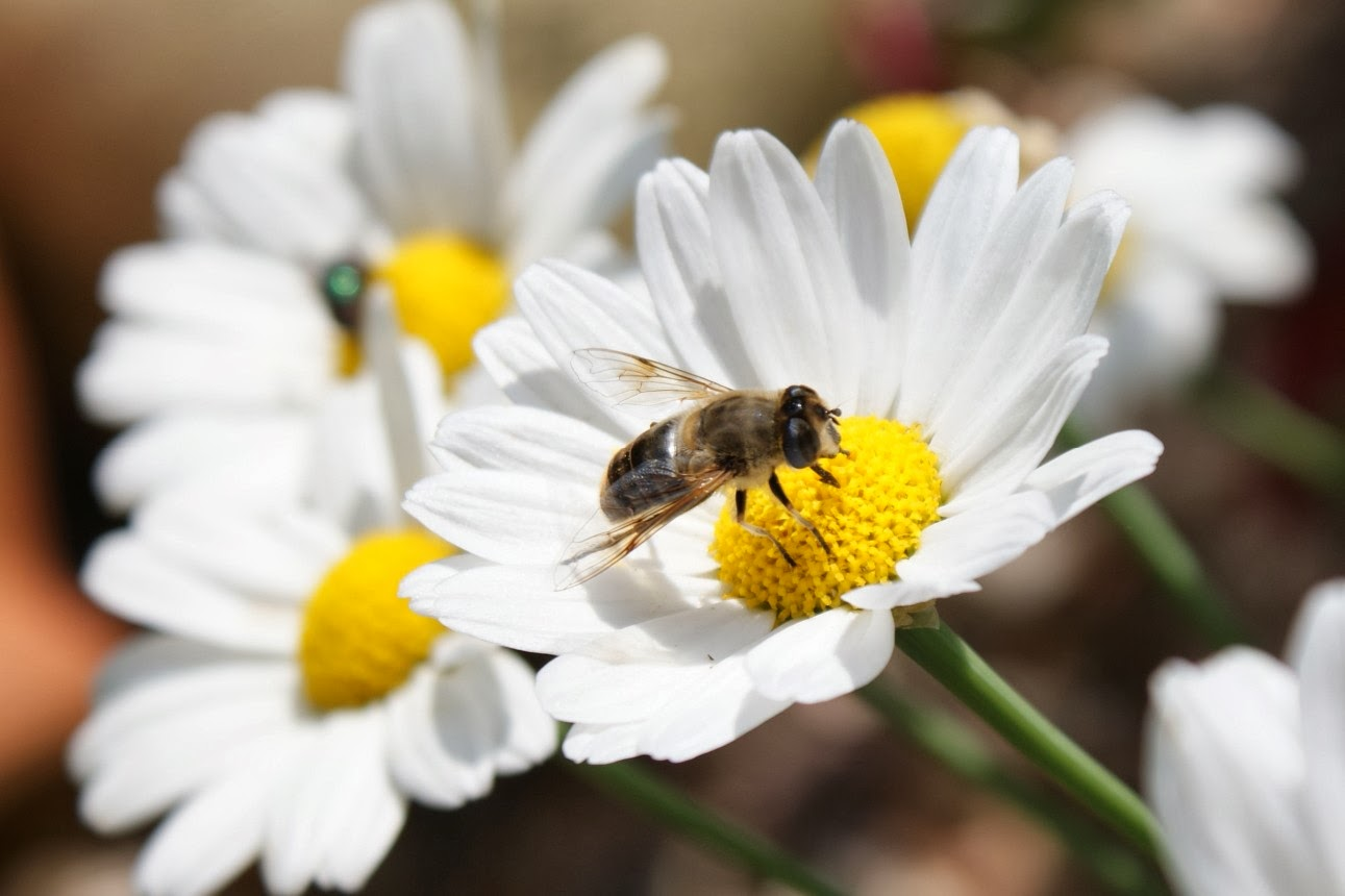 Whole Foods Living Beyond Honey Eating Bee Pollen And