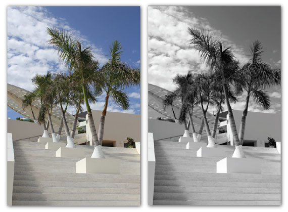 palm trees on stairs
