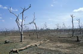 deserted, dead, trees, wood, wasteland
