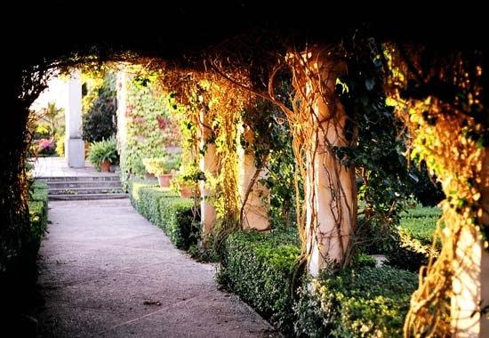 el jard n de l 39 albarda flora mediterr nea el blog de la On jardin l albarda pedreguer