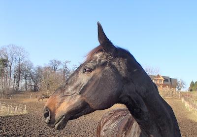 konie, jazda konna, jazda w terenie, ostatni dzień jesieni