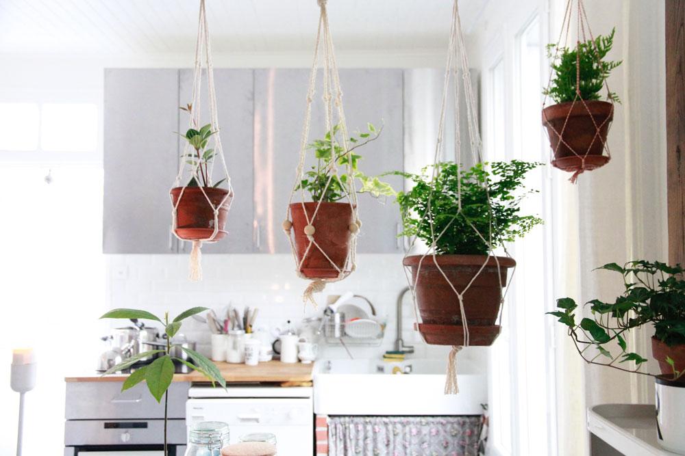 Cloison Plante merci raoul: une cloison de plantes macramés suspendus!
