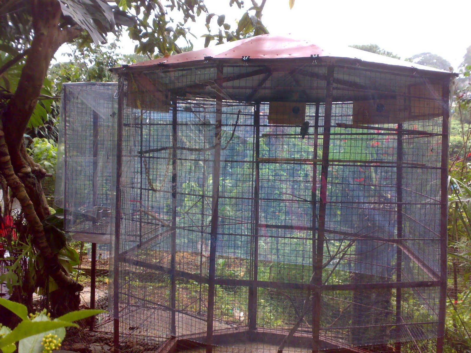 Making The Outdoor Aviary: The Lovebirds Inside the Aviary