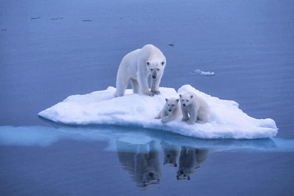 9 Makalah Pemanasan Global Harus Kamu Baca