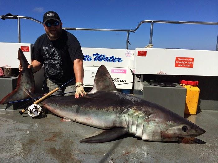 World sharks news uk caught a 198 lb porbeagle shark on fly for Shark fishing rod