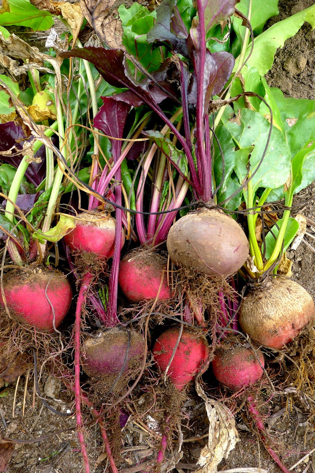 Assorted beets