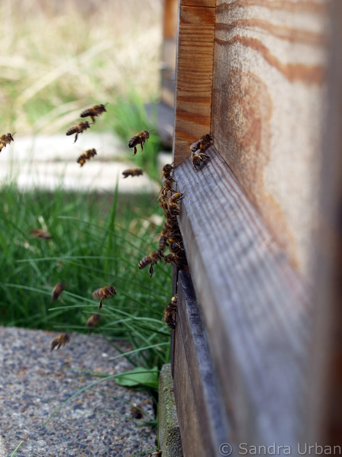 imkerei karlshorst was steckt drin im honig. Black Bedroom Furniture Sets. Home Design Ideas