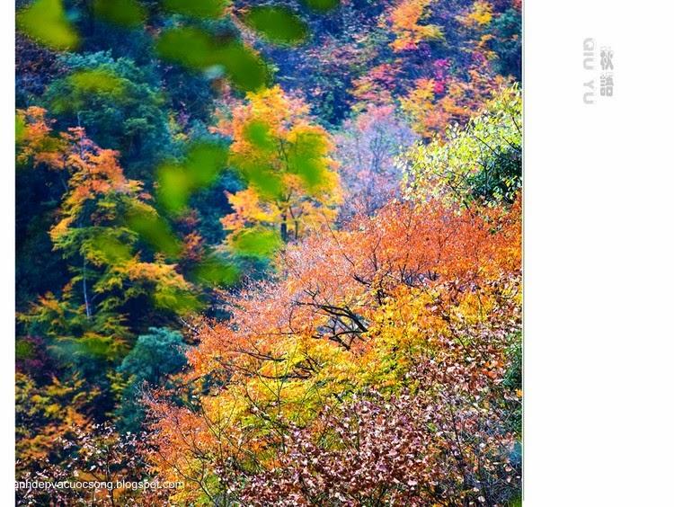 Chiếc lá mùa thu 11