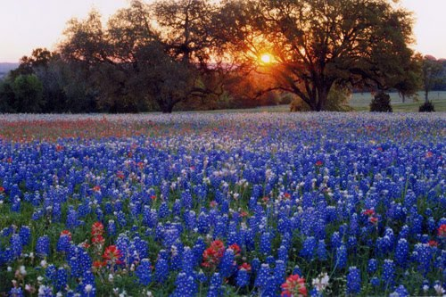 Chasing roots texas in the spring its worth a trip to texas to see their wonder and ill welcome you with open arms if youd like to return again to texas in the spring mightylinksfo