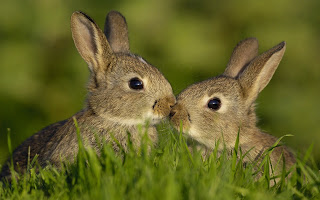Cute Lovely Bunnies HD Wallpaper