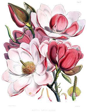 Pink flower..