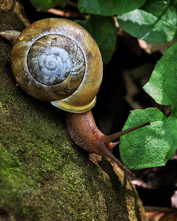 Woodland Snail Lost Valley 2012