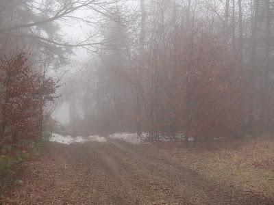 Muszyna, Tylicz, agroranczo La-Ma, grzyby zimowe, grzybobranie w grudniu, świąteczny spacer,  kisielnica wierzbowa [kisielec wierzbowy] (Exidia recisa), Trzęsak pomarańczowożółty Tremella mesenterica, Płomiennica zimowa-Zimówka aksamitnotrzonowa Flammulina velutipes