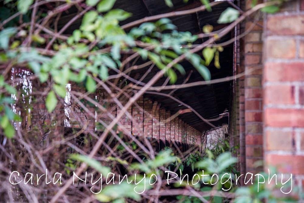 abandoned house 8