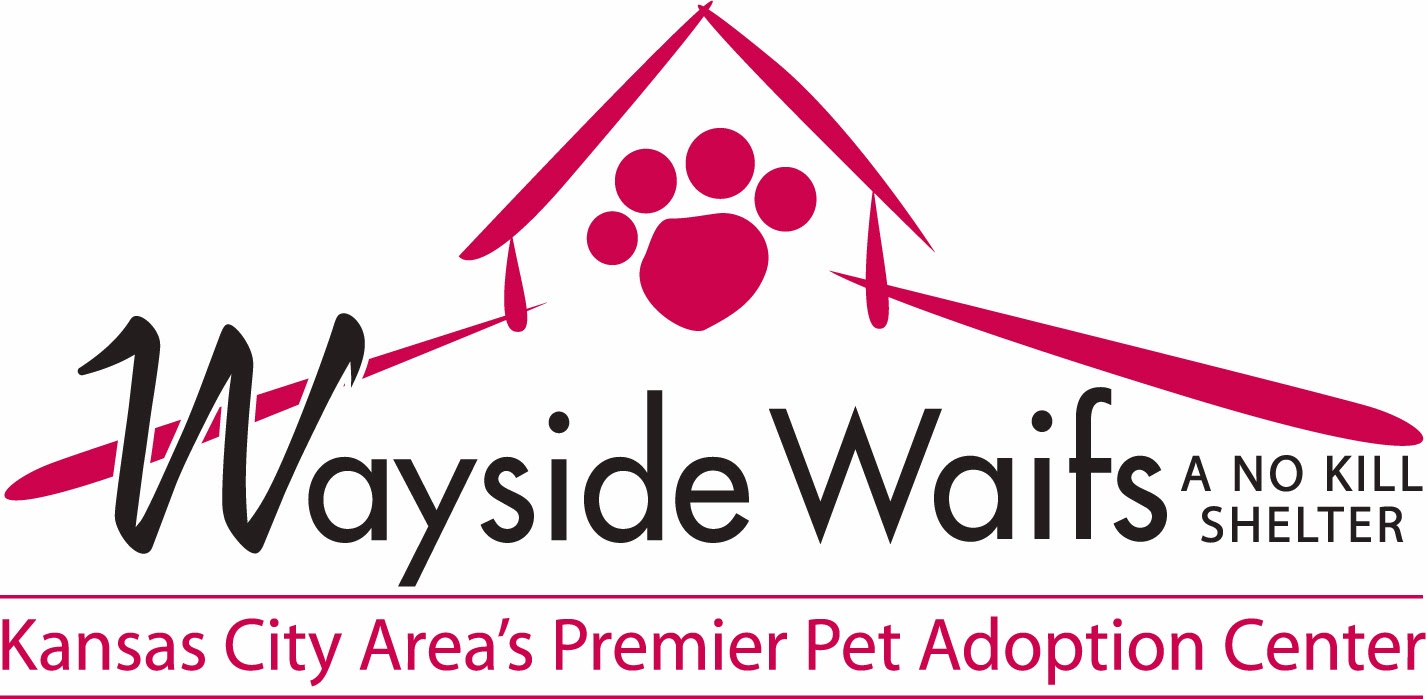 http://www.waysidewaifs.org/site/PageServer?pagename=Pet_detail_cat_new&petid=24805129