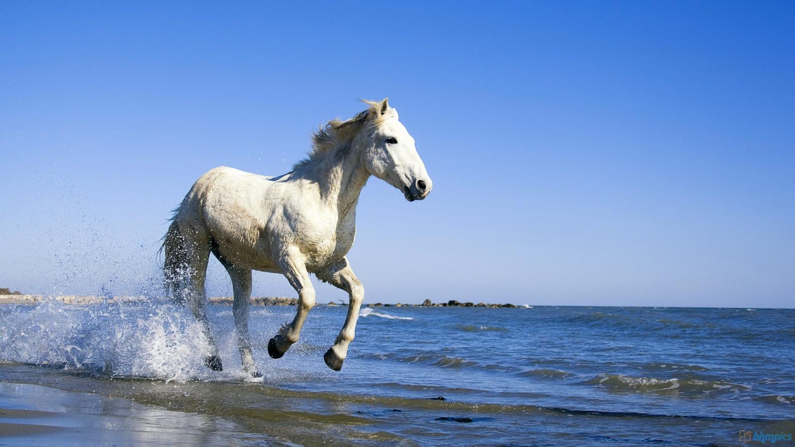 Fantastic   Wallpaper Horse Beauty - White+Horse+Wallpapers+20  HD_161578.jpg