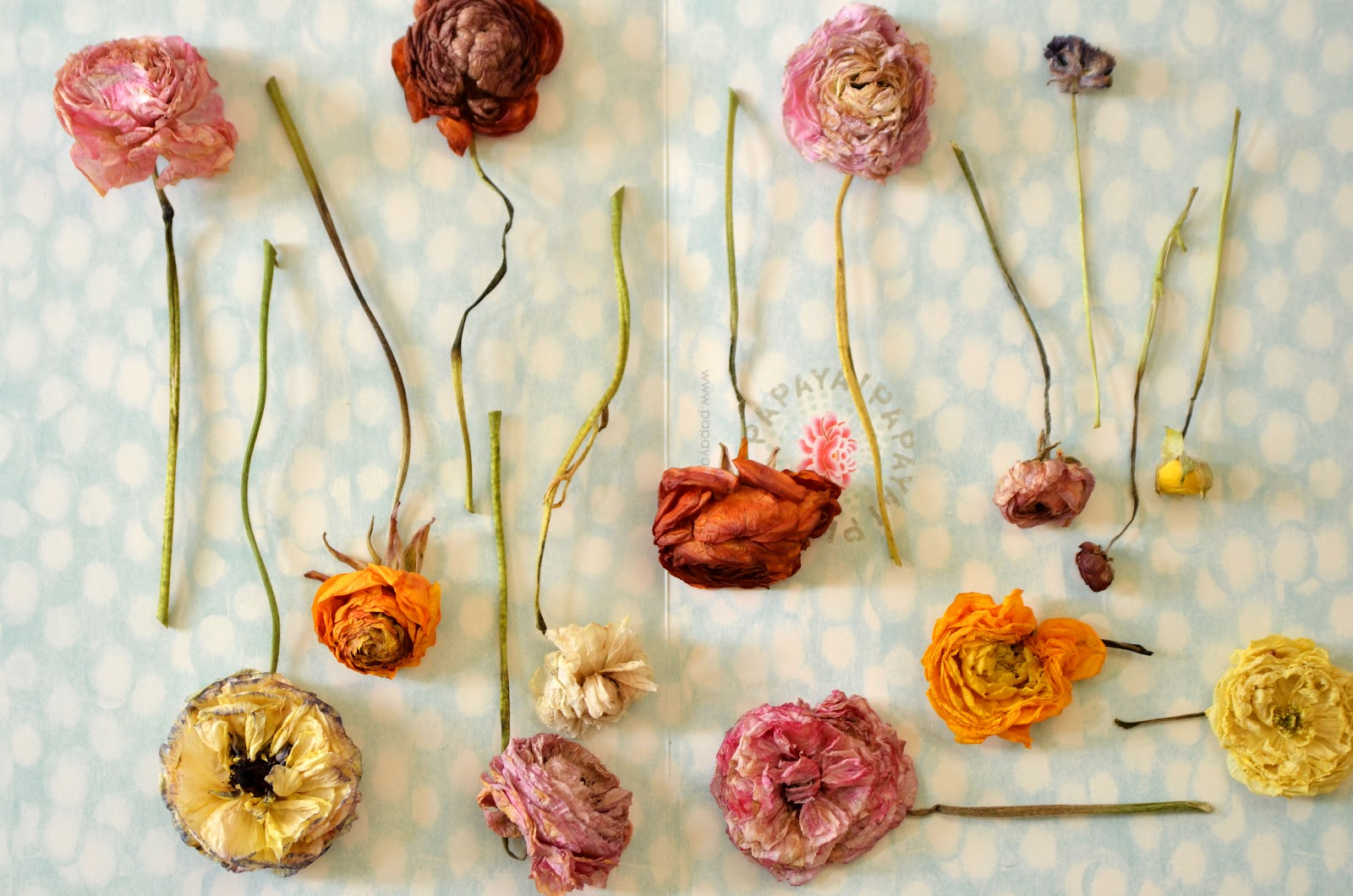 A Fanciful Life Dried Flowers Retain Their Beauty