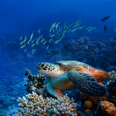 banco de im genes 10 fotos del mar azul playas